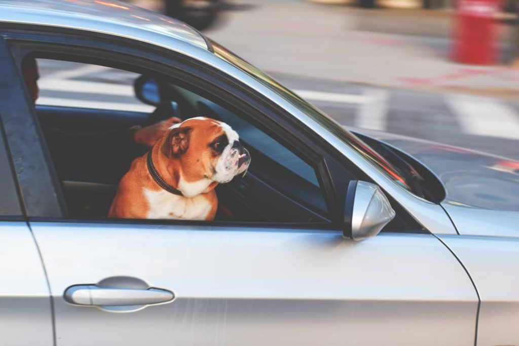 Best Dog friendly cars